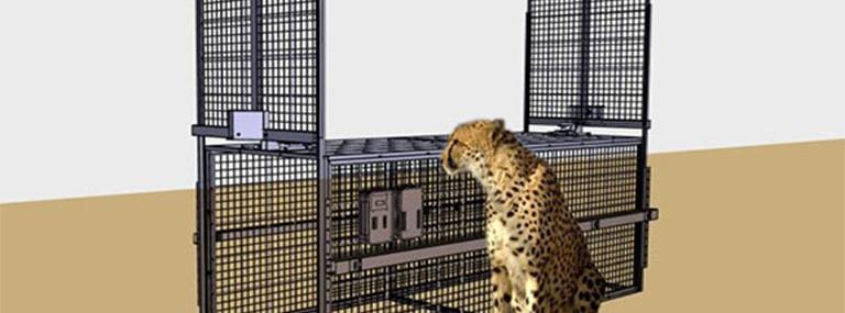 Bild Simulation Gepard vor selektiver Falle