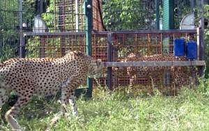 Bild Kamerabasierte Tierartenerkennung
