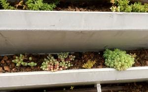 Bild Funktionsmuster Betonfertigteil zur Fassadenbegrünung