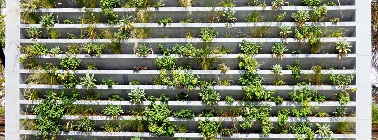 Bild Betonfertigteil zur Fassadenbegrünung nach Bepflanzung